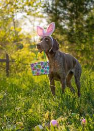 EasterWM.jpg