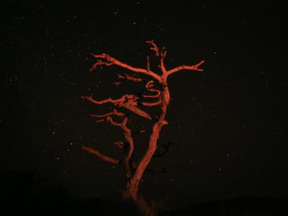 Una noche inquieta en el parque nacional de Tsavo West (Kenia)