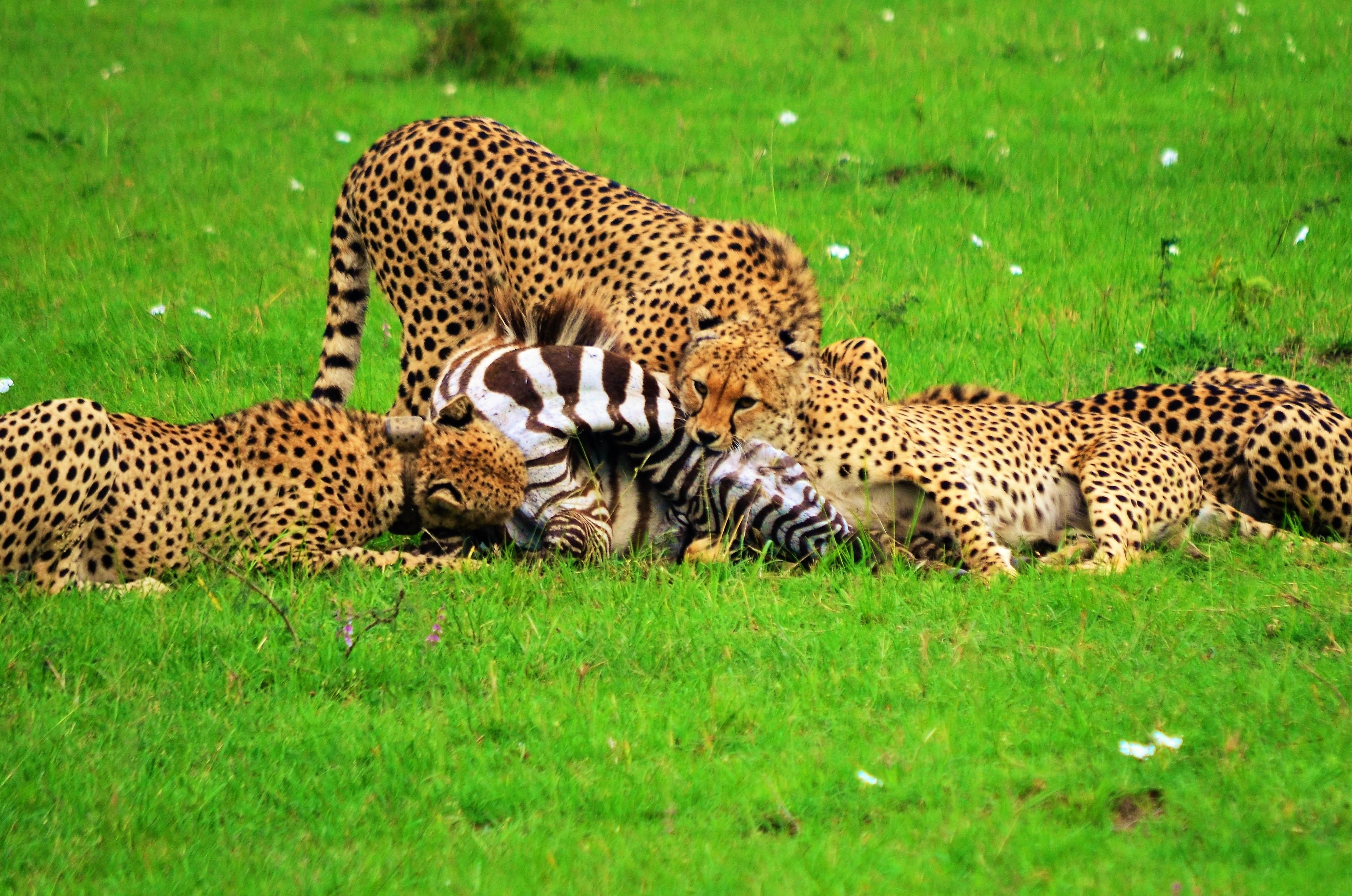 safari 6 días en Masai Mara