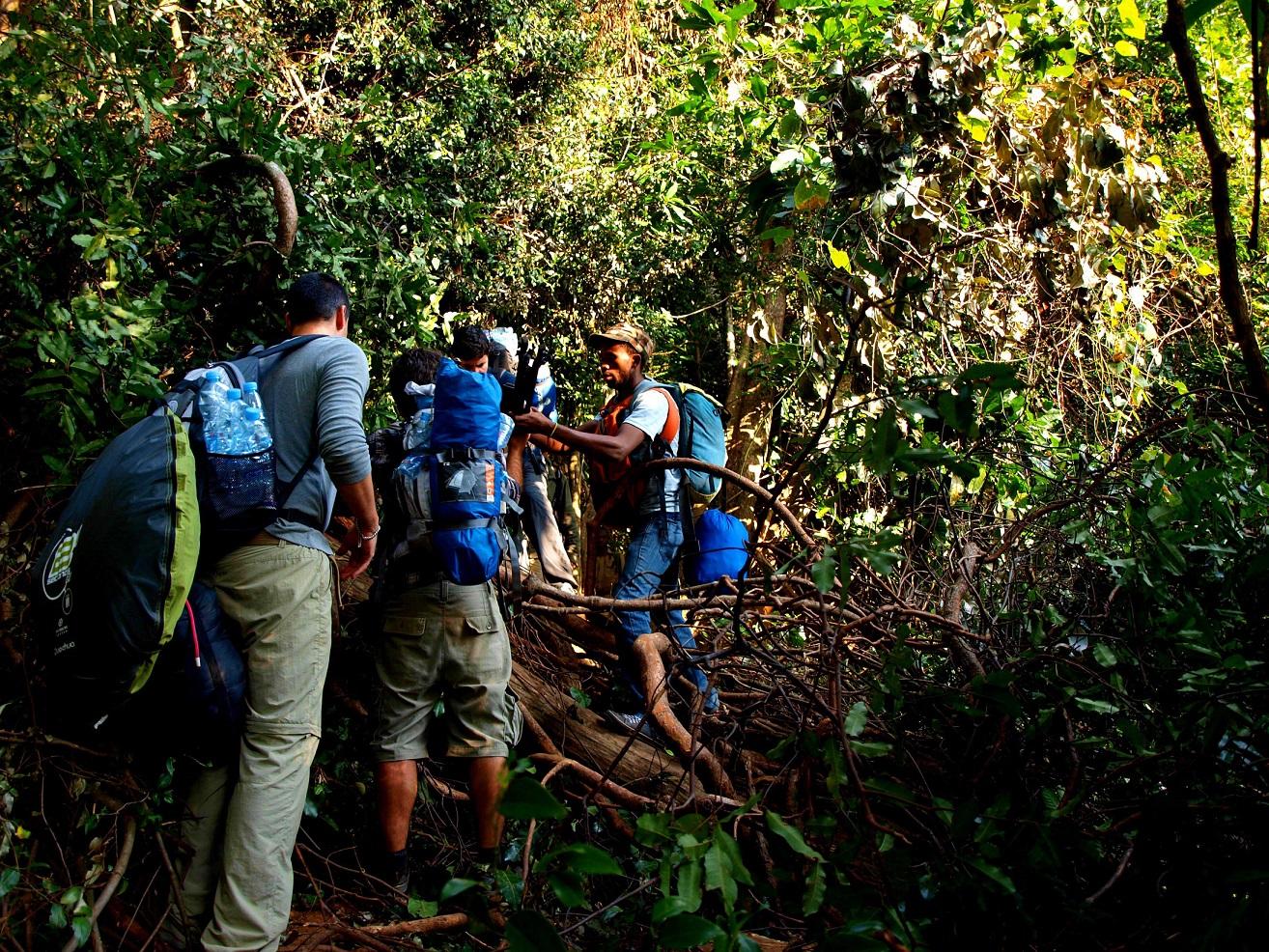 trekking por la selva en Tanzania
