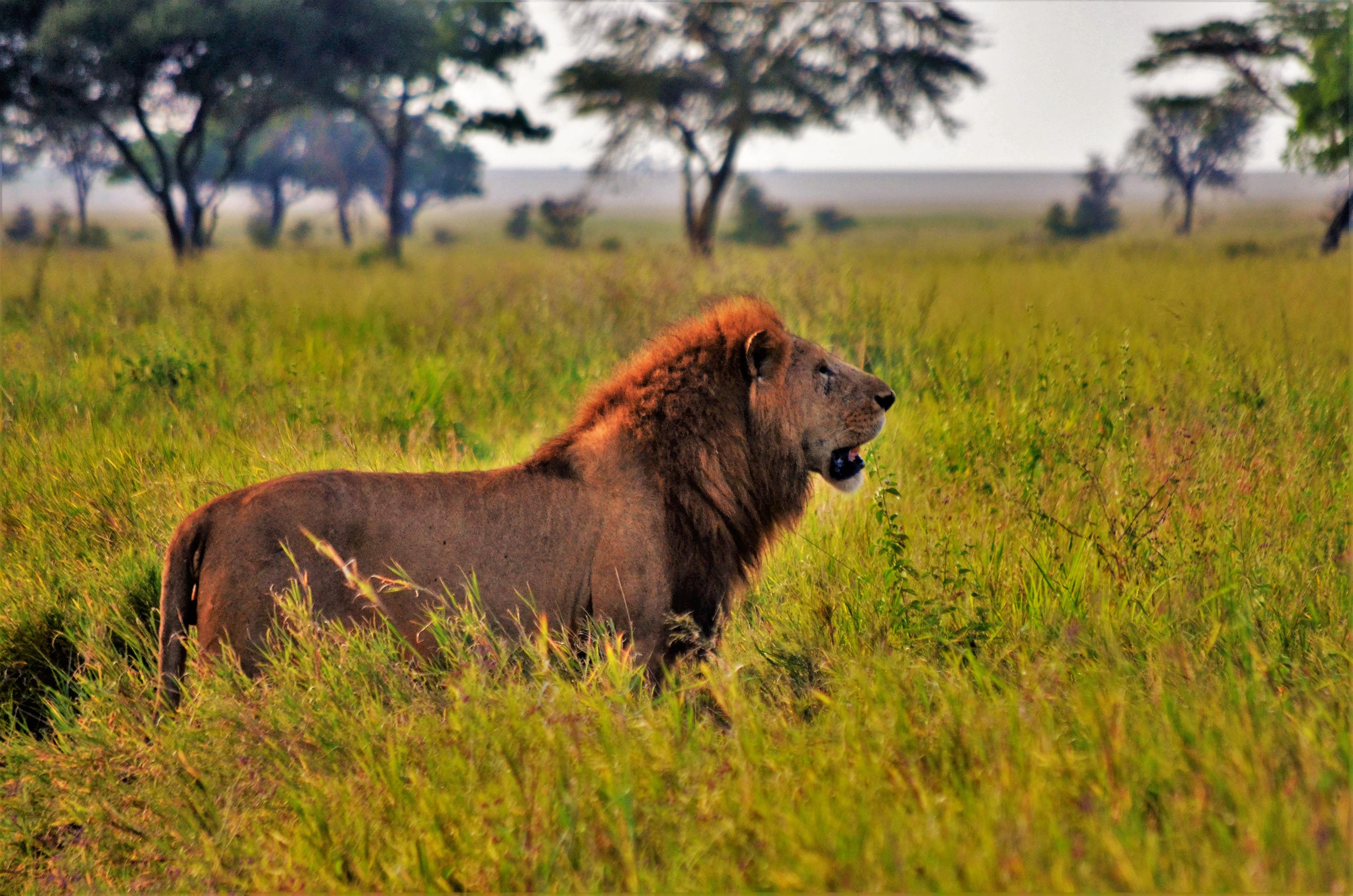 safari de 6 días norte de Tanzania