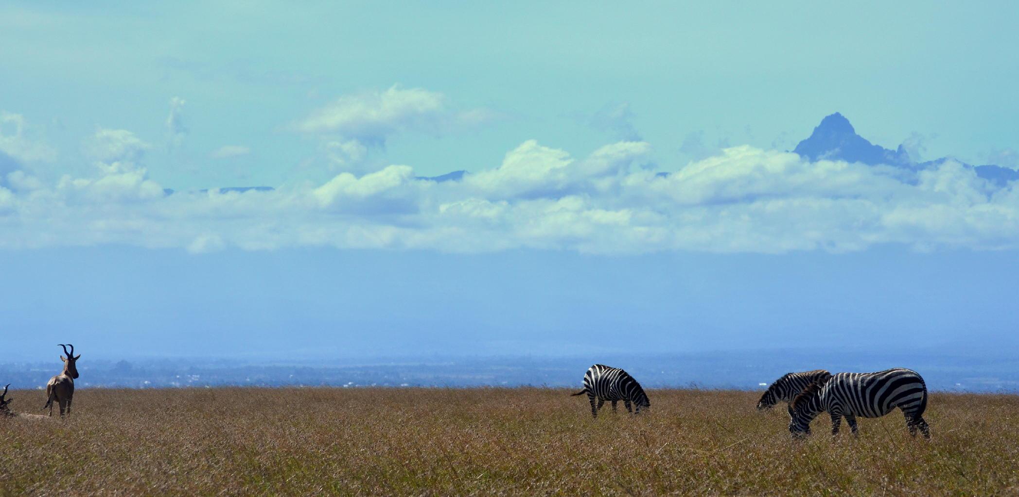 monte Kenia.jpg