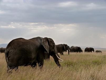 Sobre la importancia de conservar la naturaleza salvaje. El Serengeti no debe morir