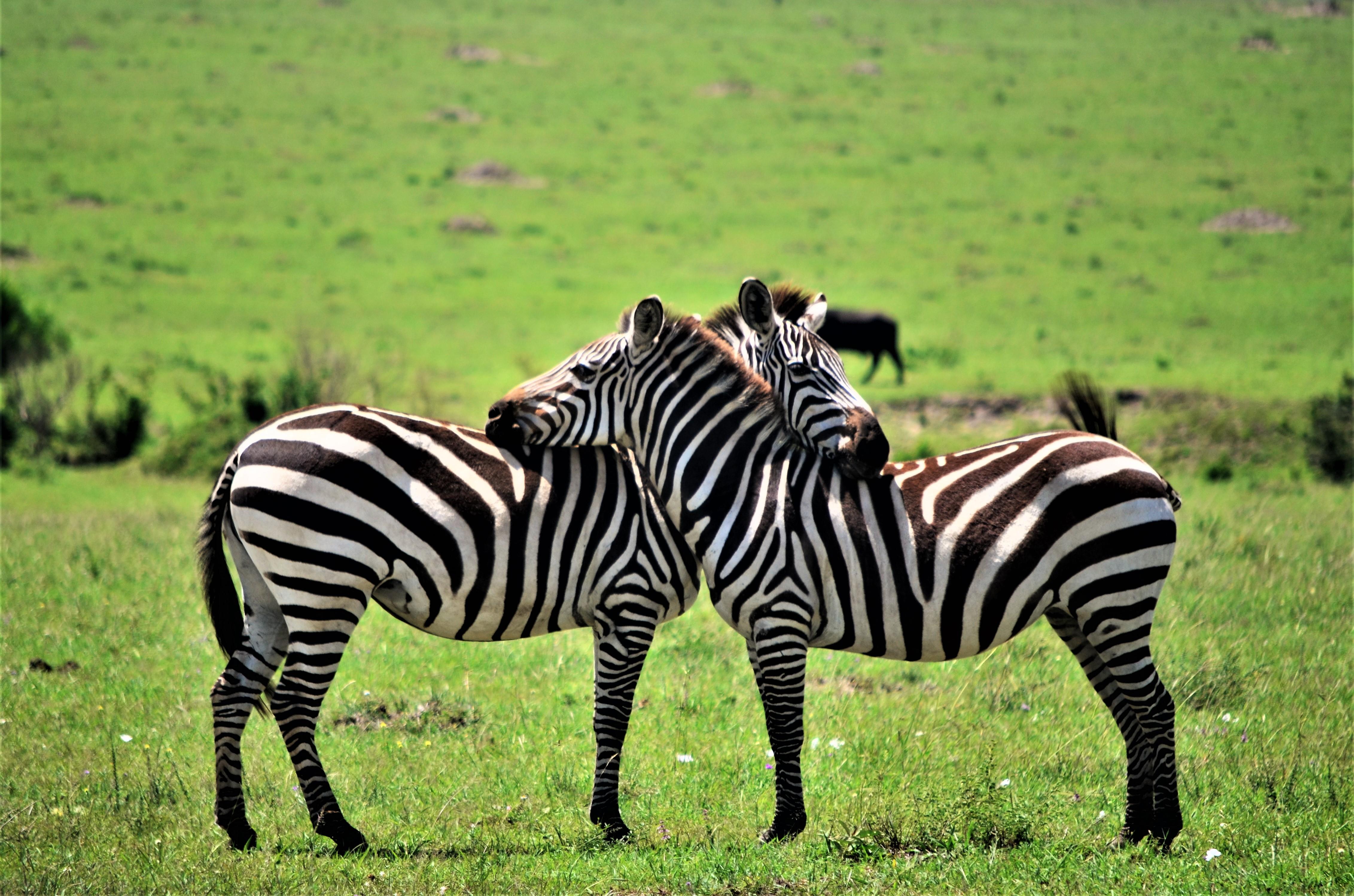 safari 7 días masai mara
