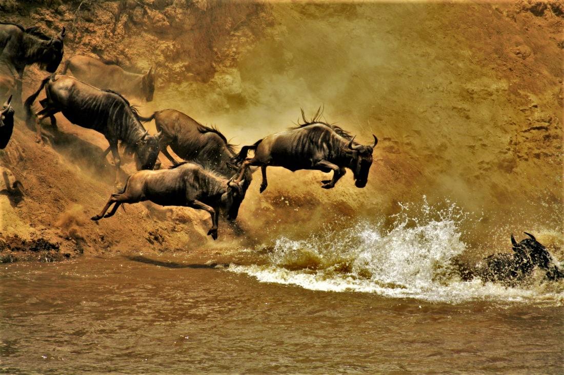 safari 6 días norte de Tanzania