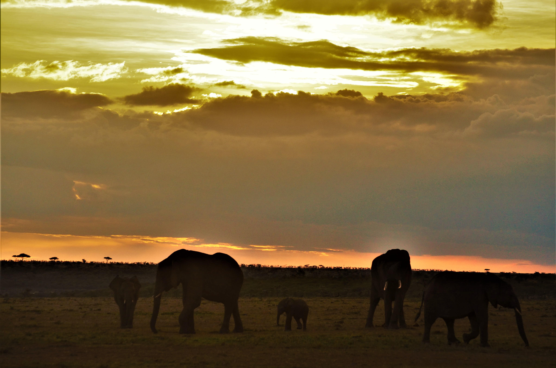 safari Naboisho y Masai Mara