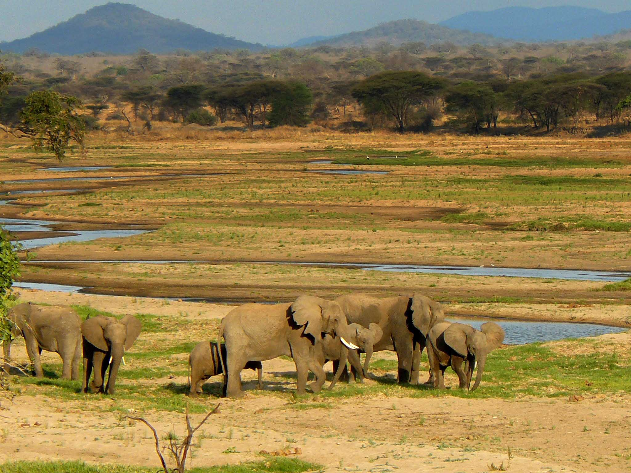 Elefantes en safari privado en Ruaha