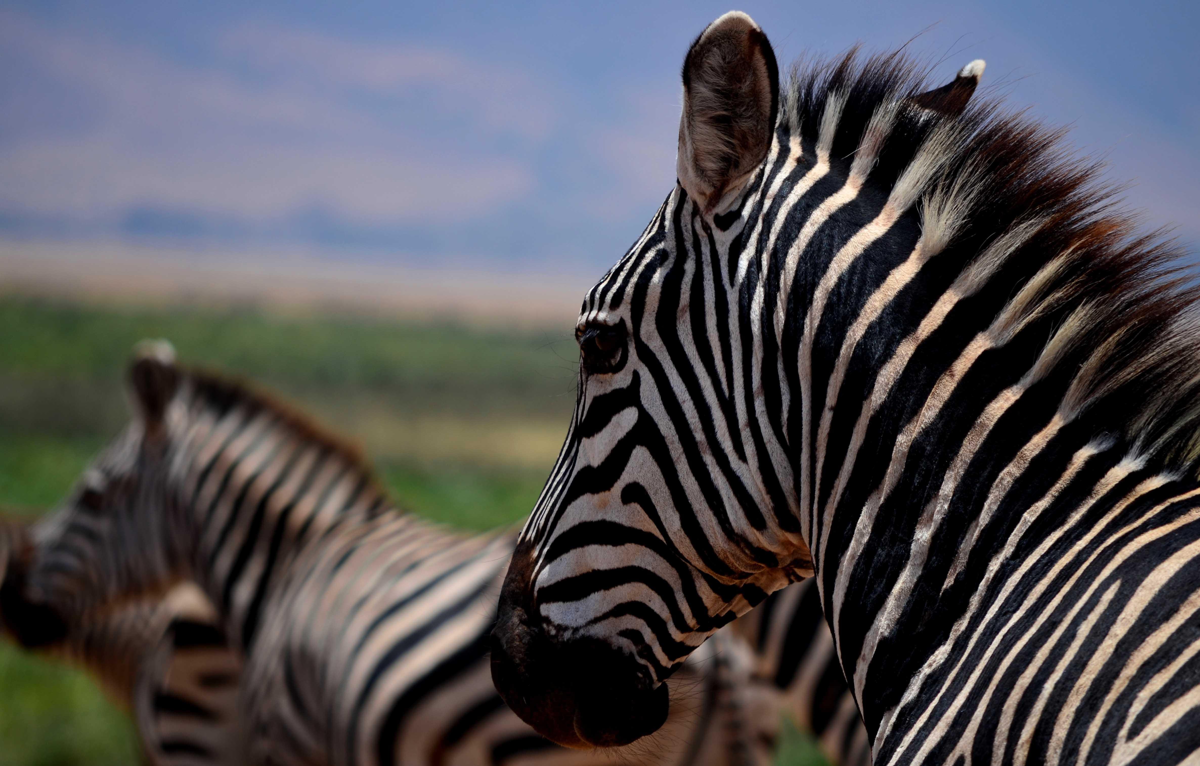 safaris en el sur de Tanzania.Mikumi