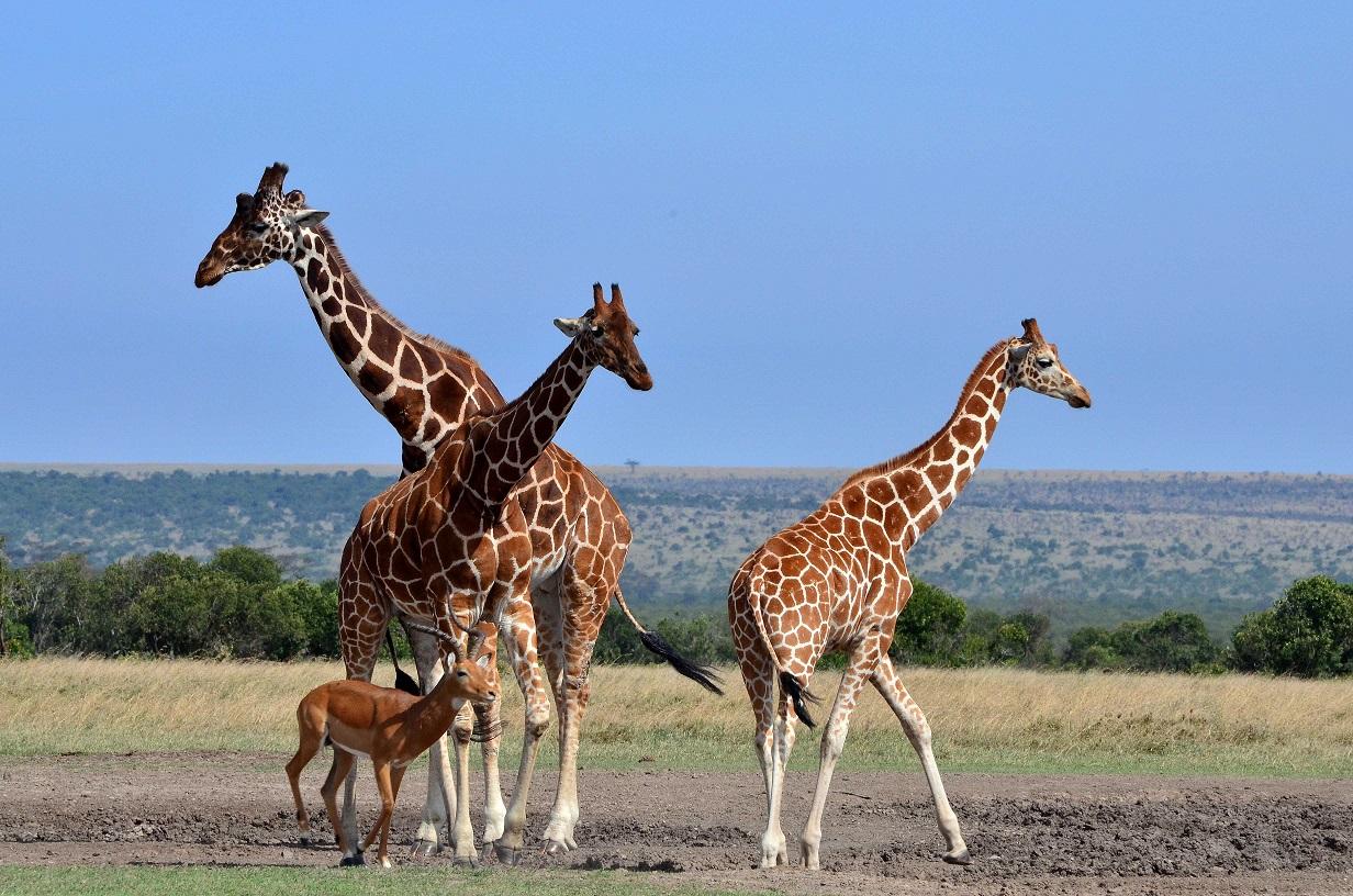 safari de 2 días en Tanzania Mikumi