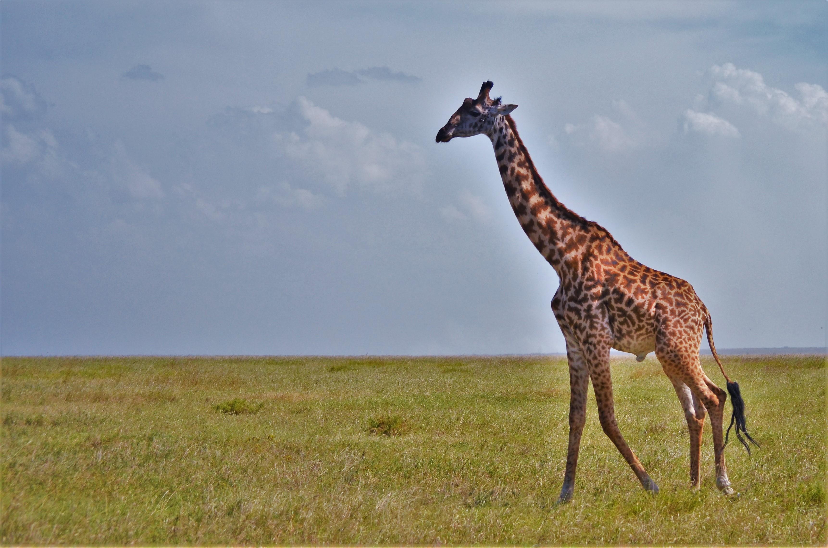 precios safari 6 días