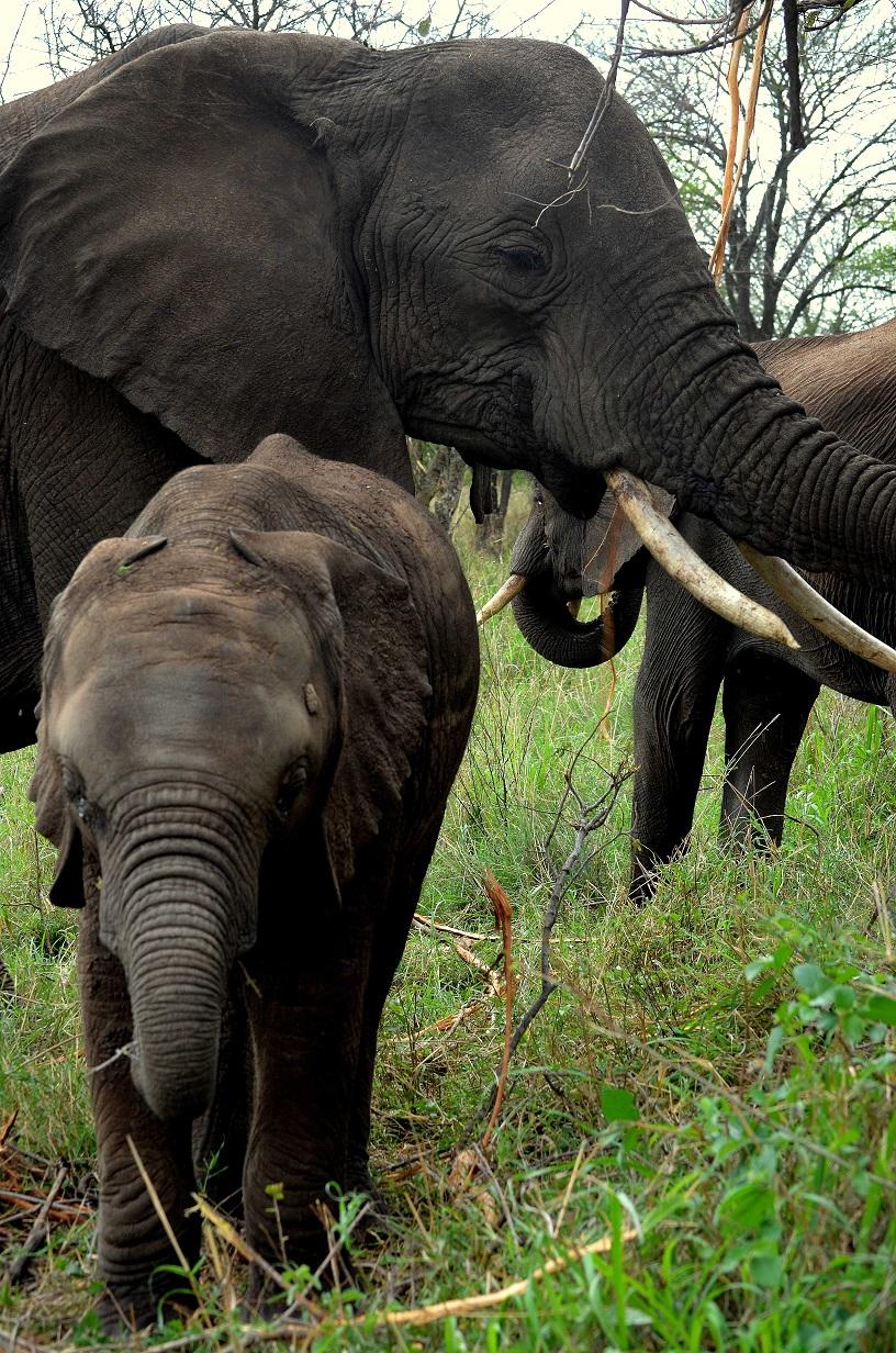 safari en la reserva de Selous