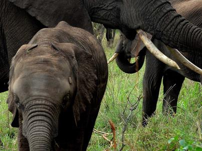 Is conservation extinct?