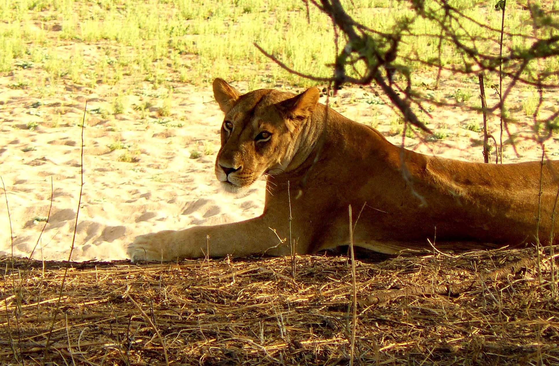 safaris en Mikumi Tanzania