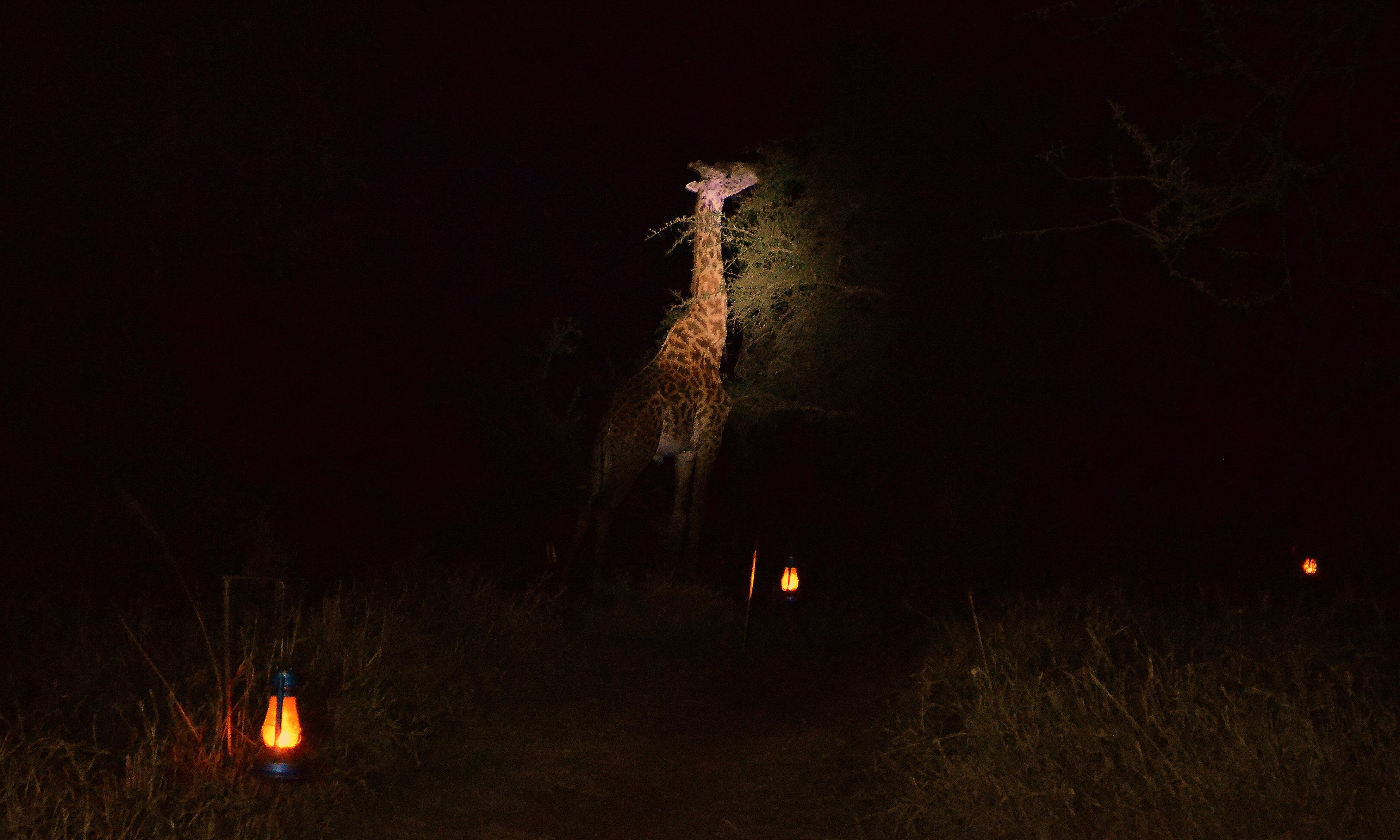 Visitante nocturno trekking tanzania