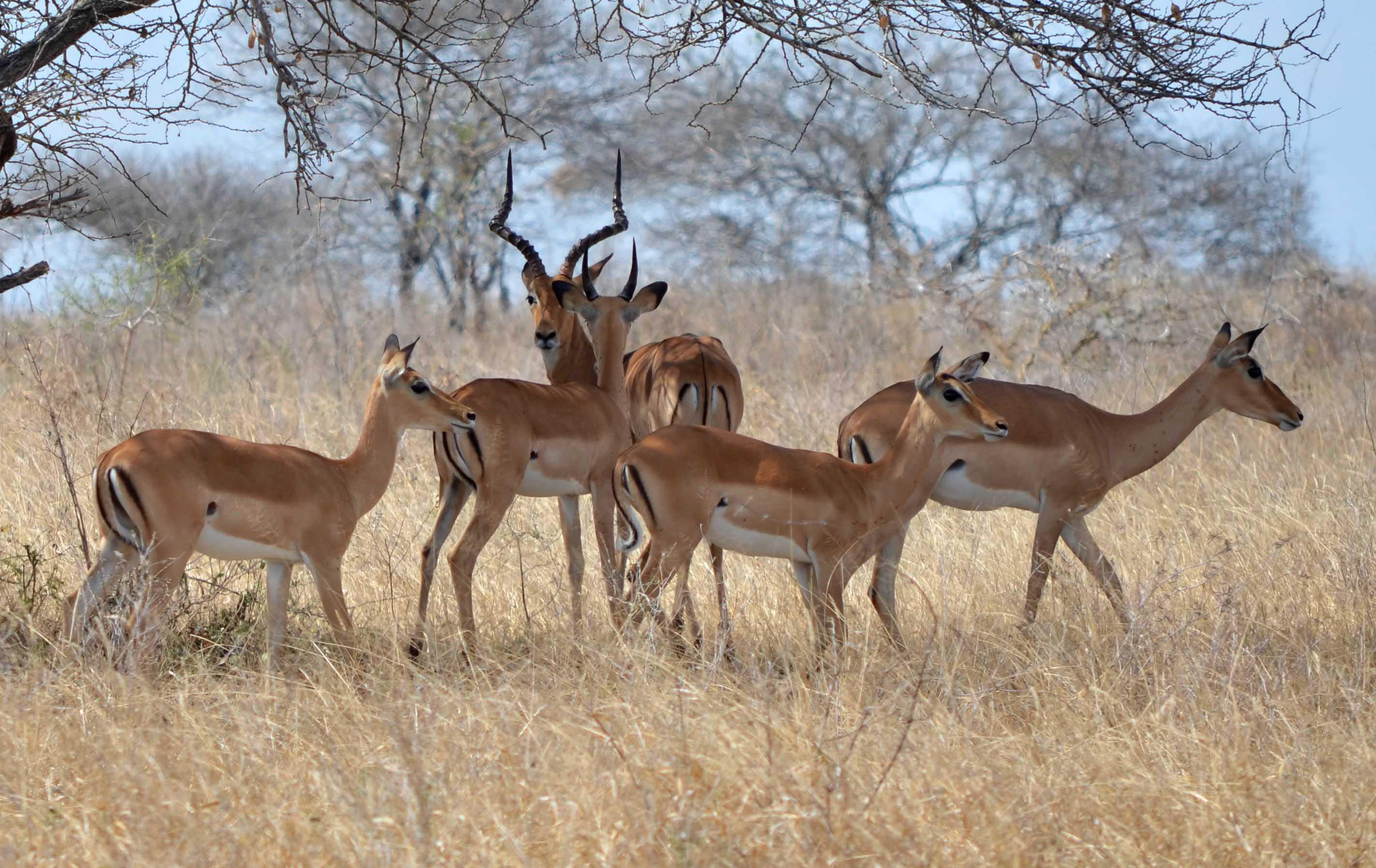 safaris de trekking en Tanzania