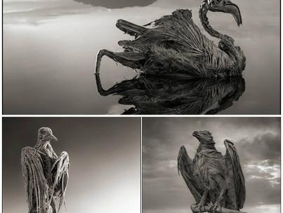 Animales convertidos en Piedra, en el Lago Natron ( Tanzania )