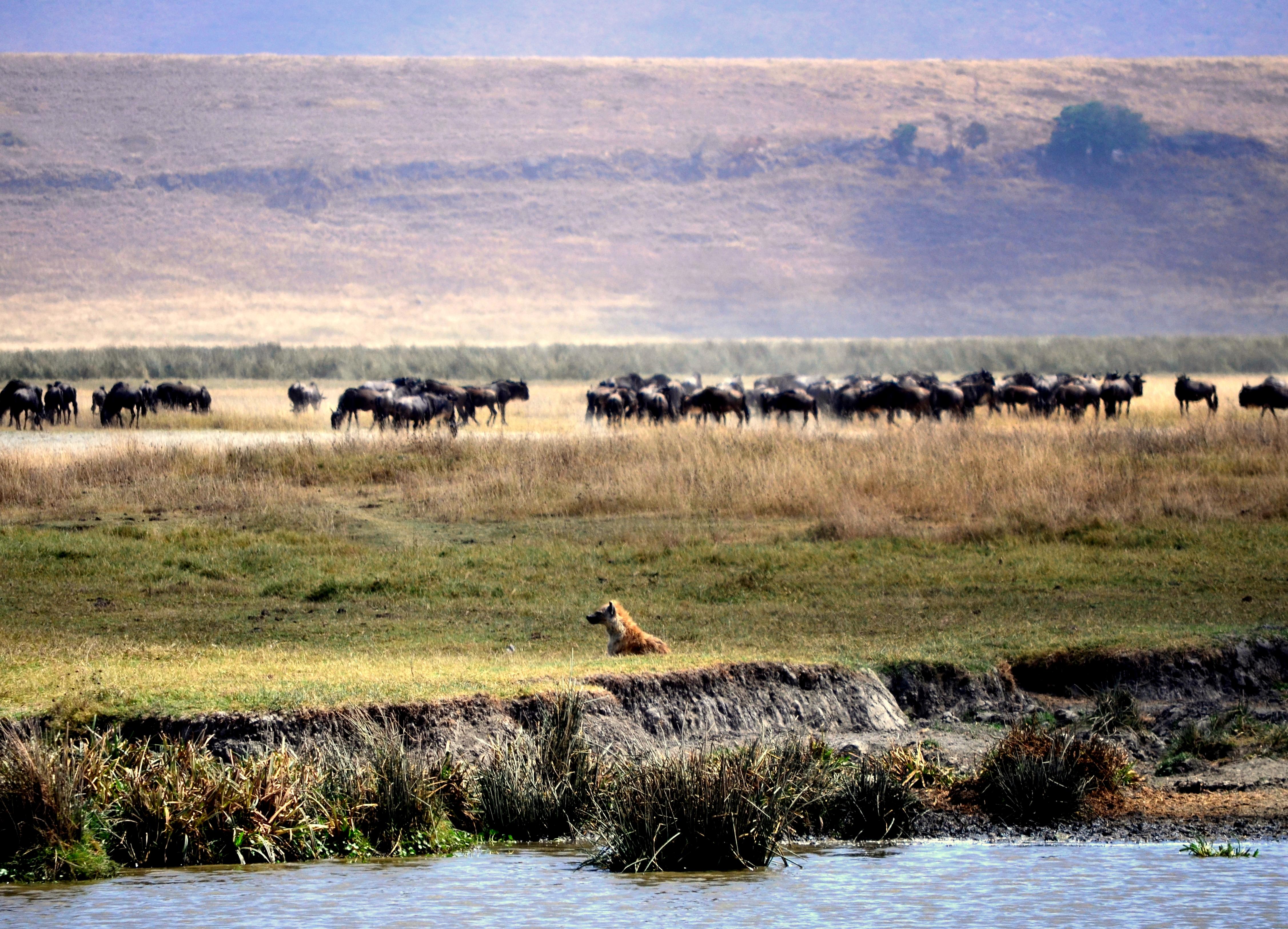 Interior del cráter del Ngorongoro