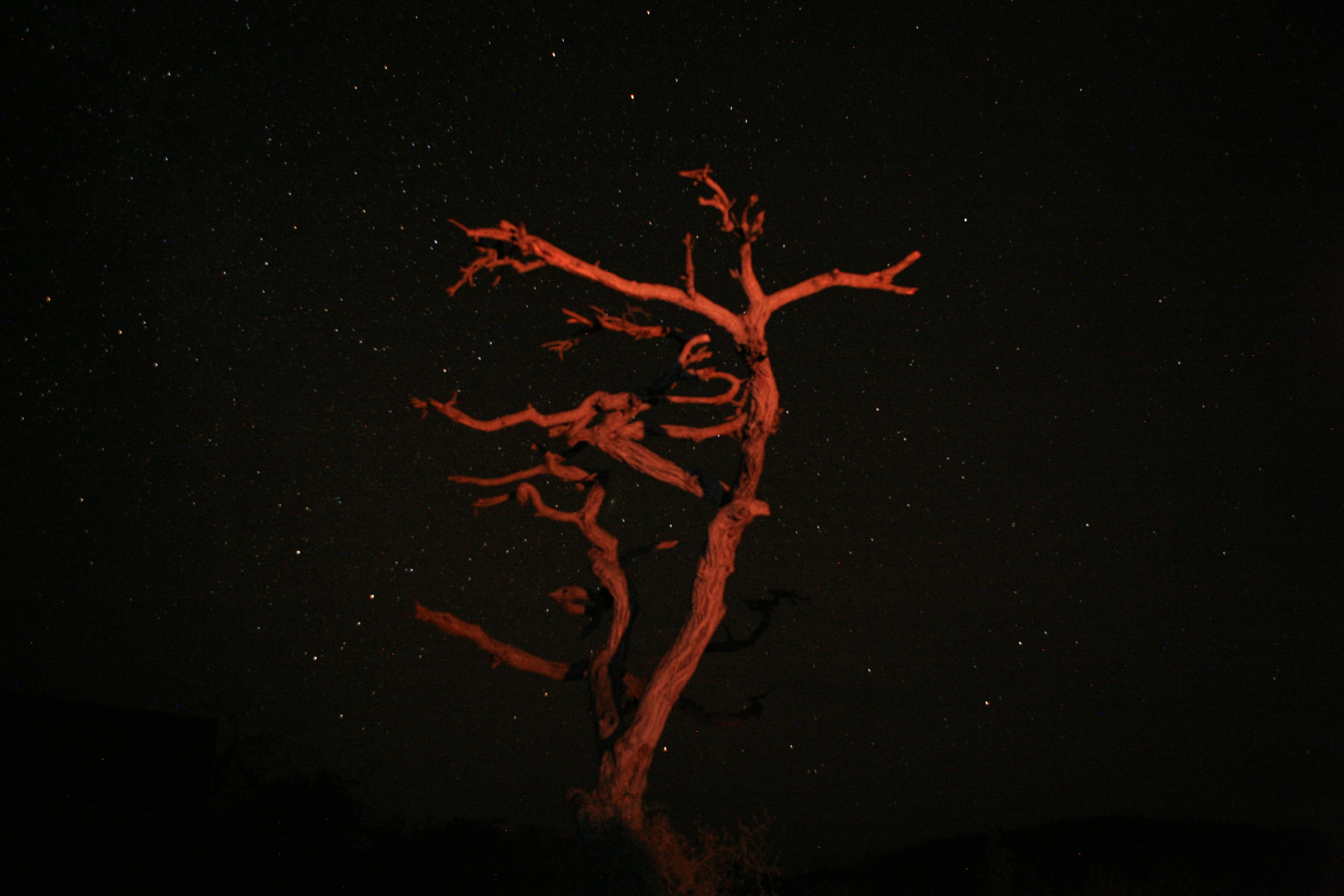 arbol iluminado por el fuego safari