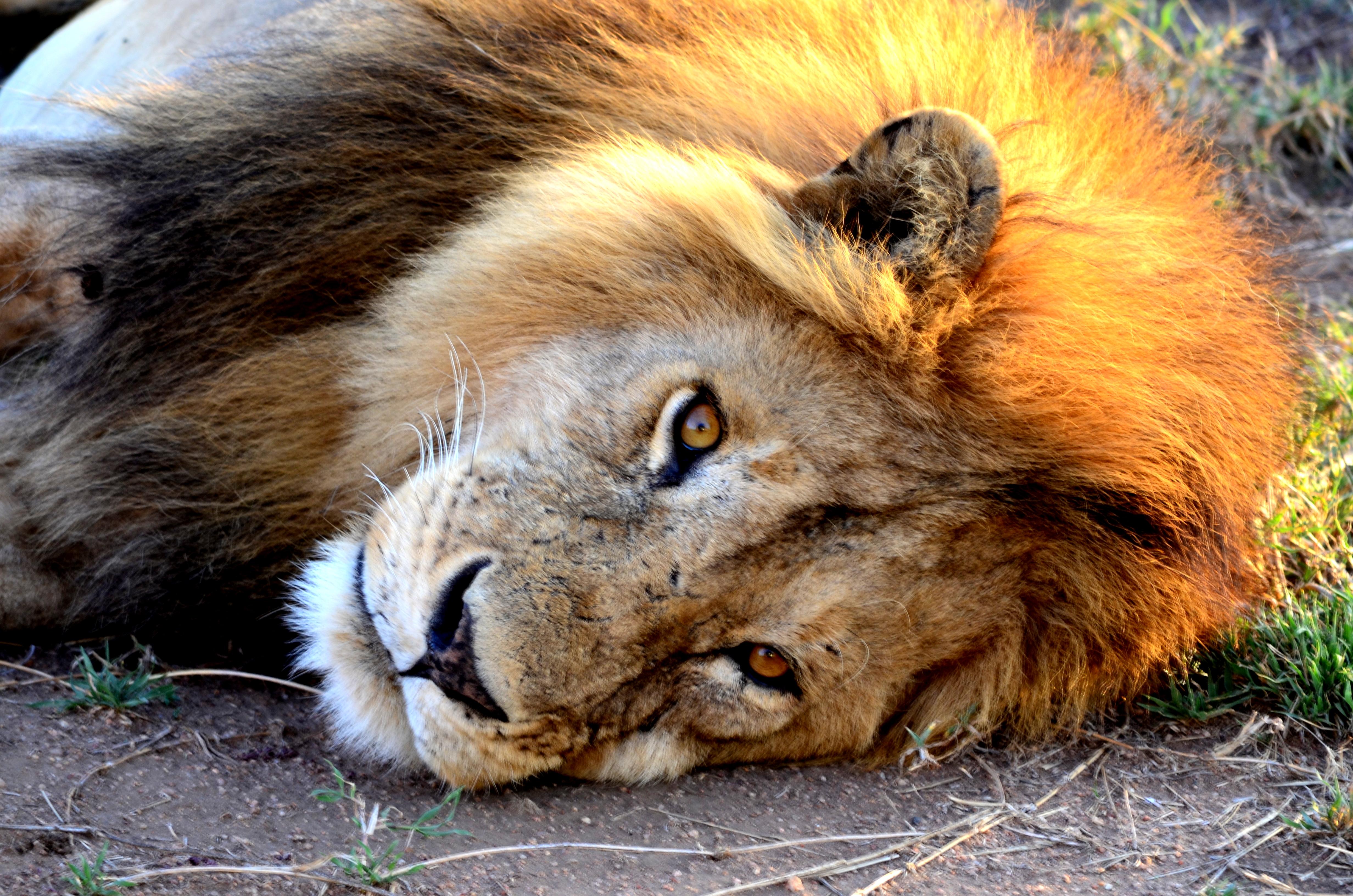 León en Mara