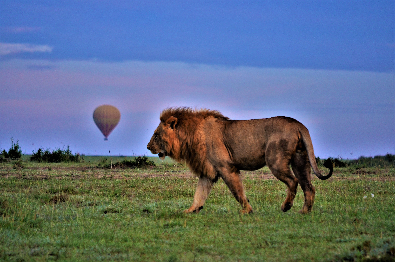 safari 7 días en Kenia