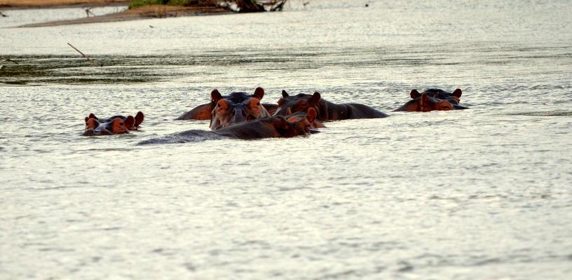 hipótamos safari 2 días sur Tanzania
