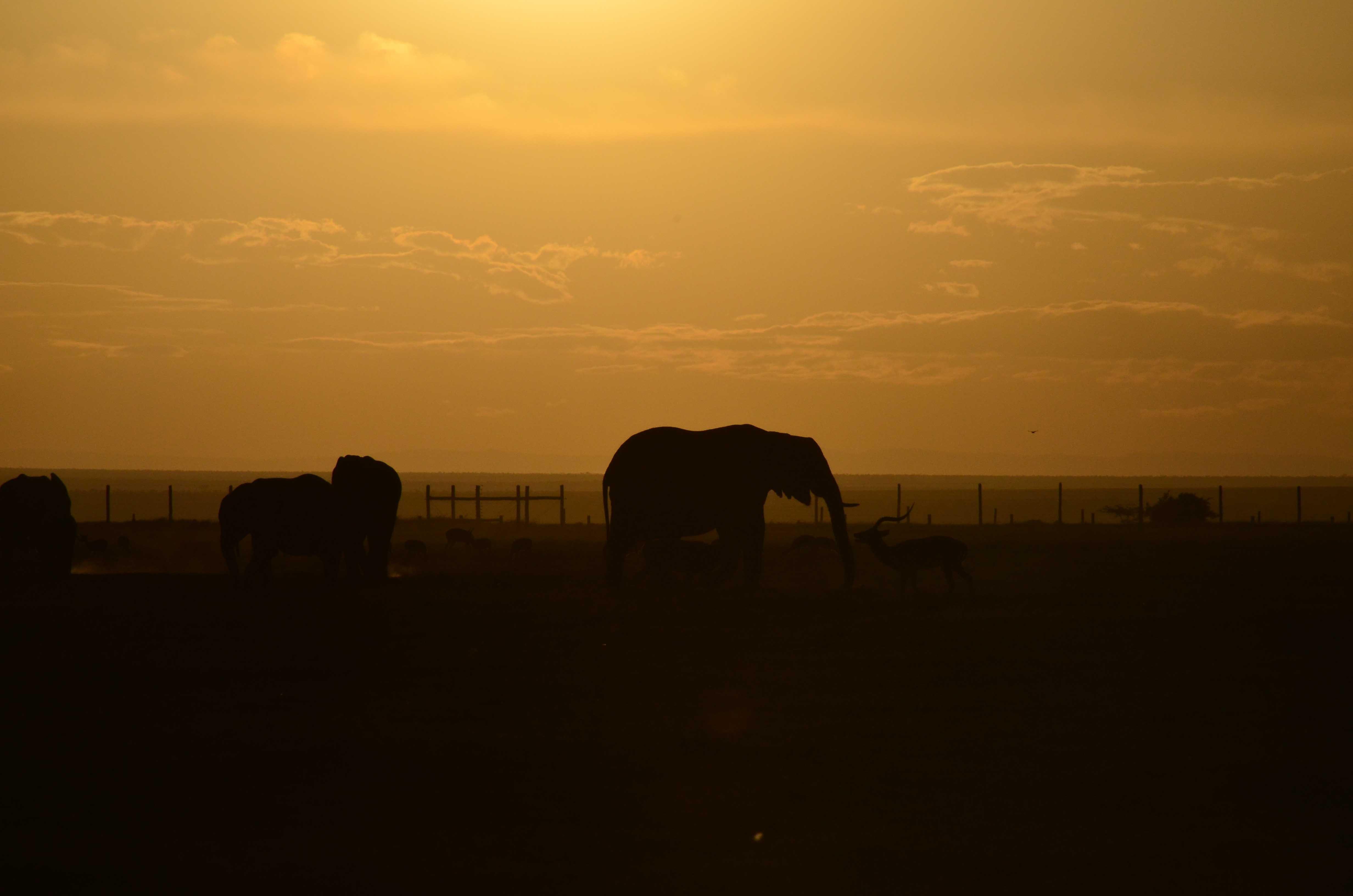 Atardecer en safari en Kenia