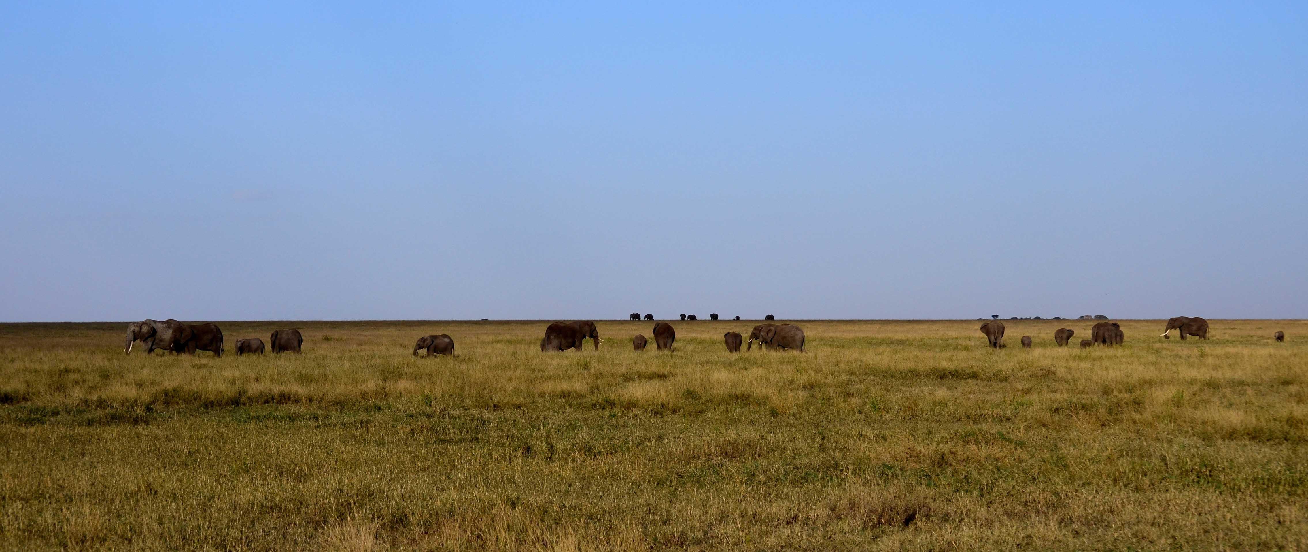 Llanuras del Serengeti