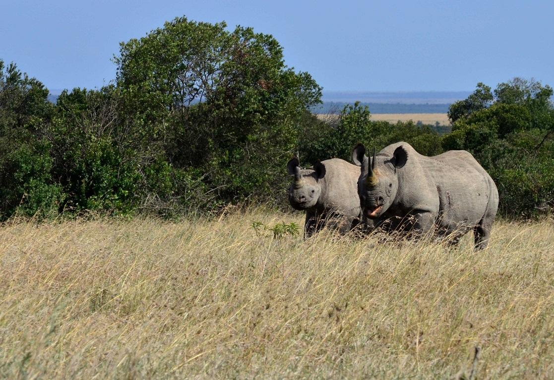 safaris en grupo por Kenia