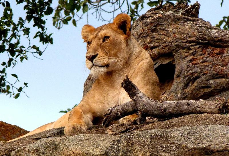 León Kopje Serengeti Safari Tanzania