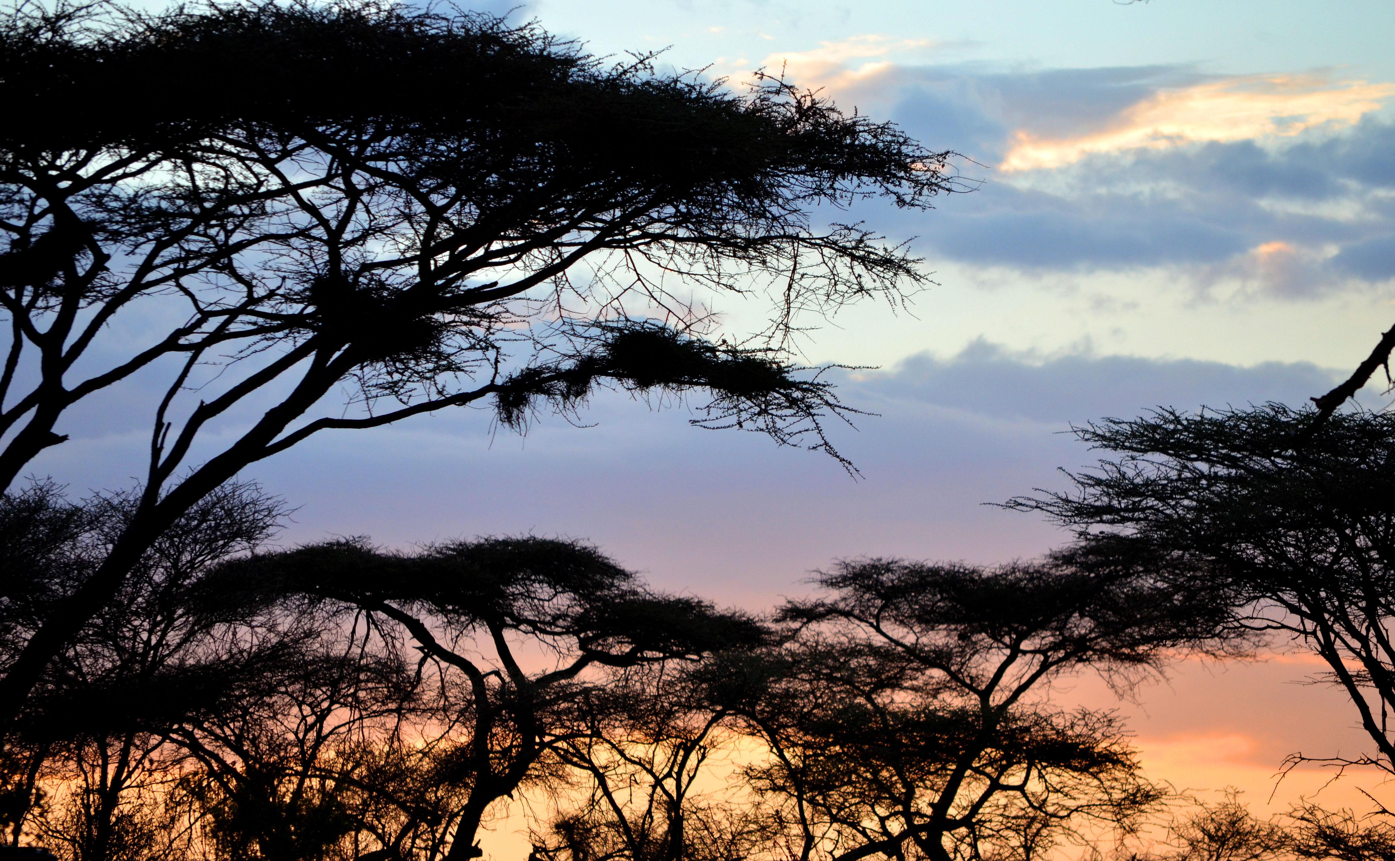 trekking Tanzania. safaris Tanzania