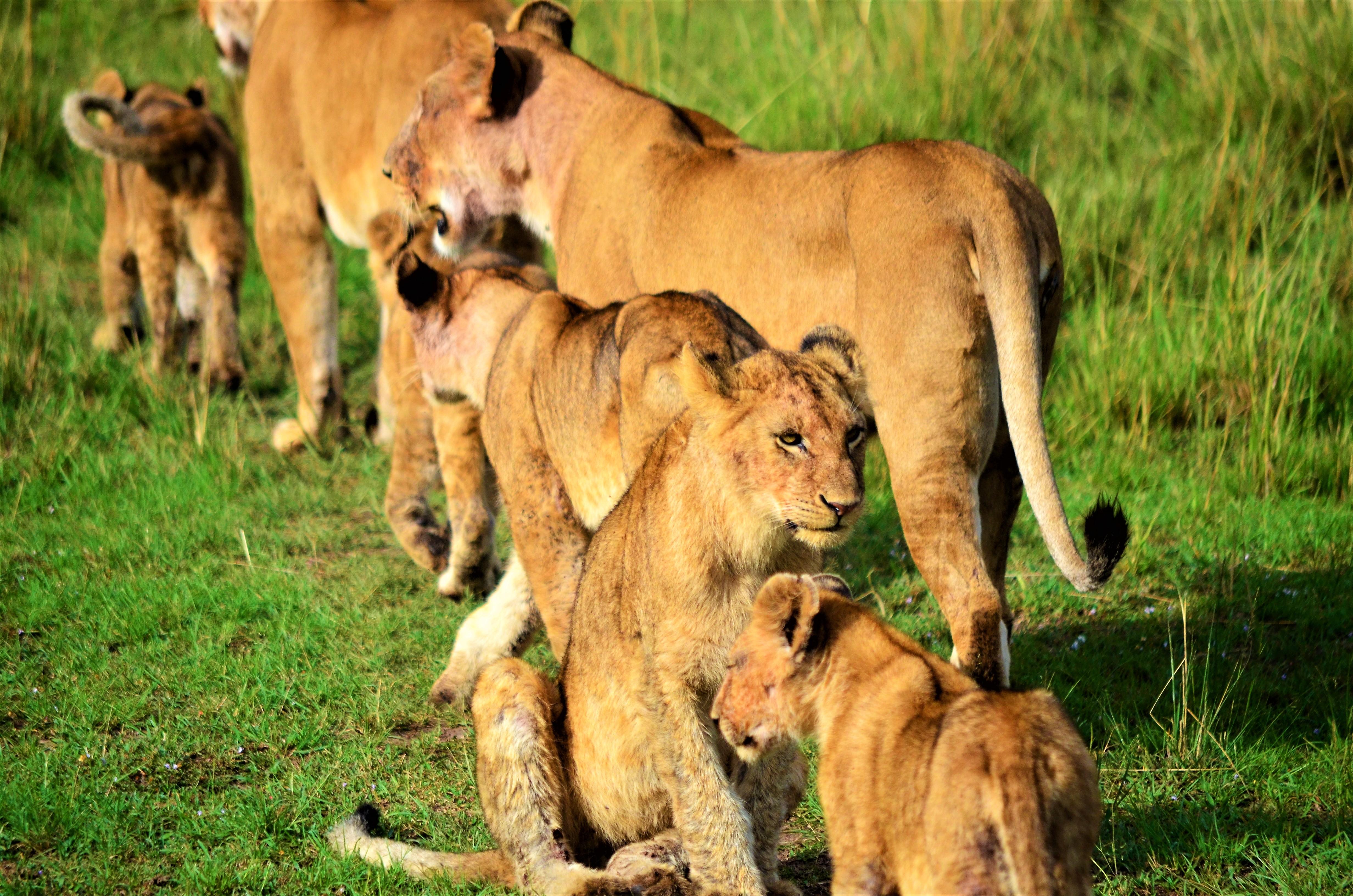 safari de 6 dias norte de Tanzania