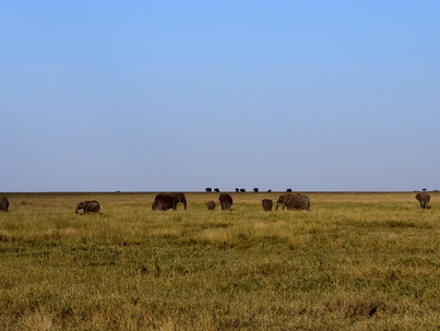 Paisajes de Tanzania. Elefantes en el Serenteti