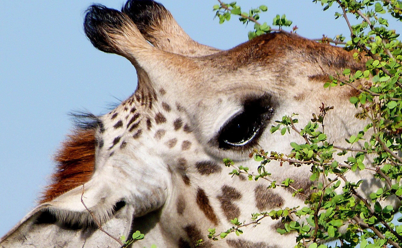 trekking en Tanzania safaris