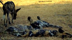 El turismo como última posibilidad de salvación para la fauna salvaje