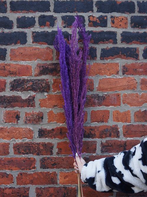 Deep Purple Pampas Grass