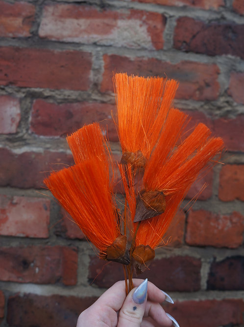 Orange Ventaglio