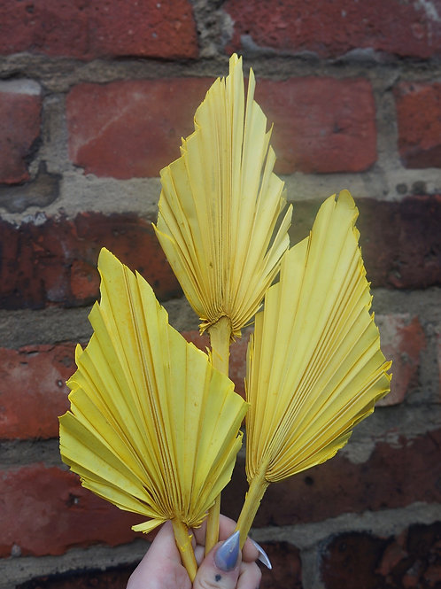 Yellow Palm Spears