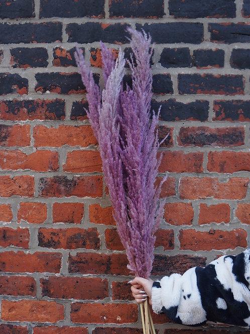 Lilac Pampas Grass