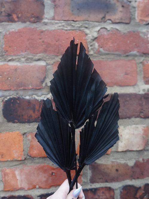 Black Palm Spears