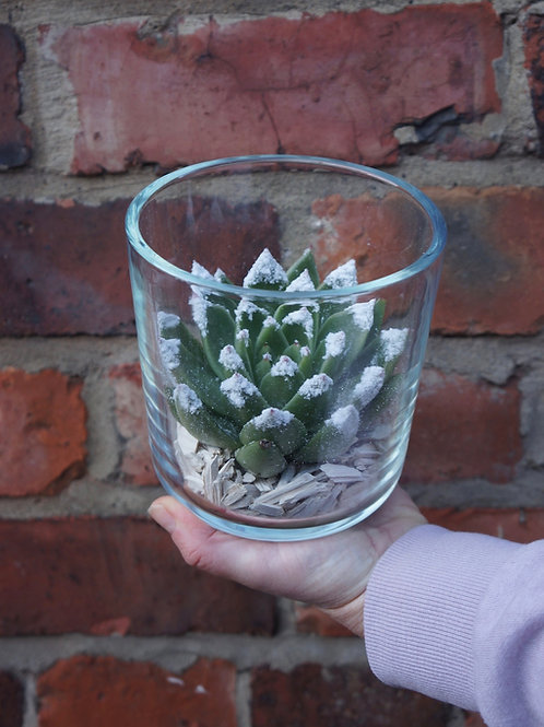 Frosted Succulent