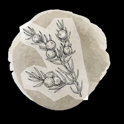 Cedro Virginia (juniperus virginiana)