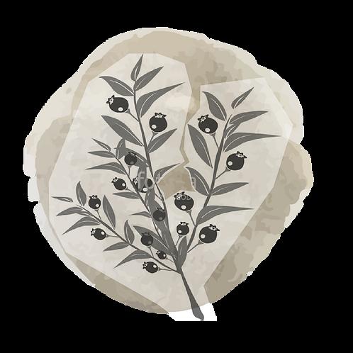 Mirto (myrtus communis L.)