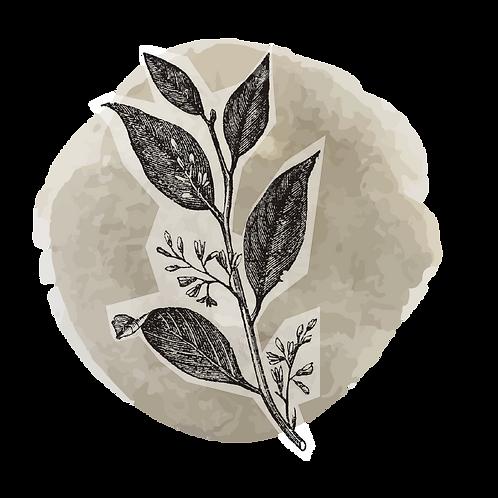 Benjuí 40% diluido (styrax tonkinensis)
