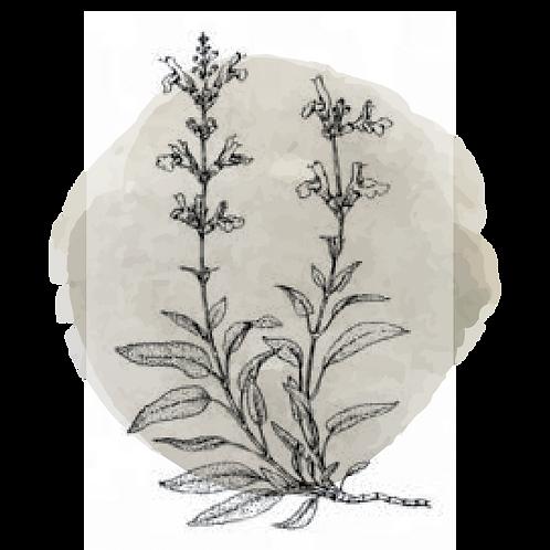 Salvia (Salvia Offinalis)