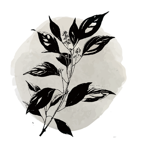 Palo de Ho  (Cinnamomum Camphora)