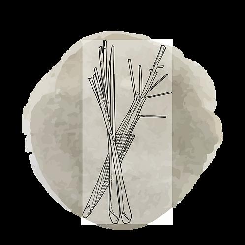 Lemongras (Cymbopogon Flexuosus)