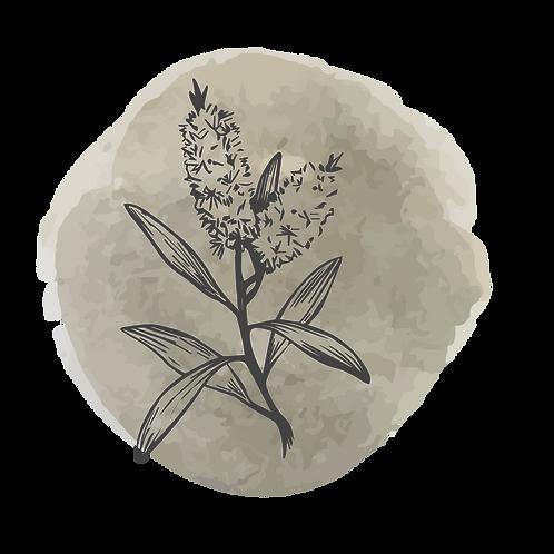 Tee Trea (melaleuca alternifolia)