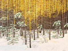 Sunkissed woods