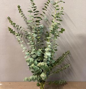 Angebot: Eukalyptus Baby Blue im Bund für 6,90€