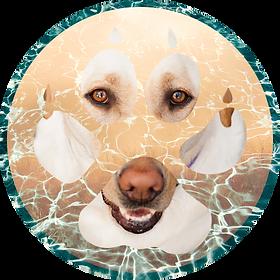 DOGS1_lighten.png